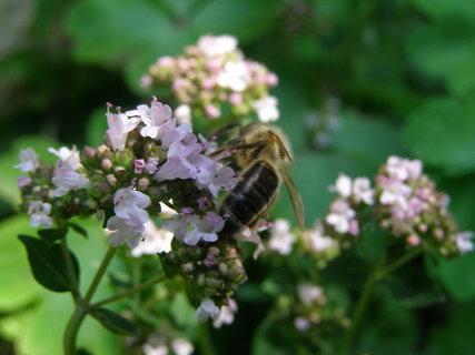 FOTKA - pilné včelky