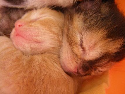 FOTKA - spící pusinky