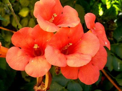 FOTKA - řecké květy 8