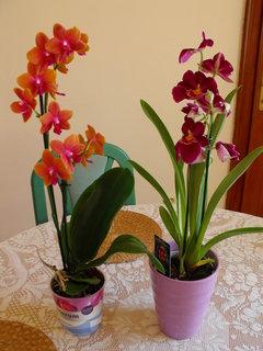 FOTKA - Orchidejky pospolu