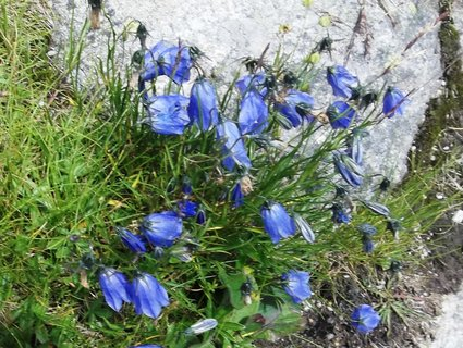 FOTKA - Květena pod Soliskom asi 1800m/m..