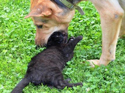 FOTKA - Láska kočky a psa i když to tak nevypadá
