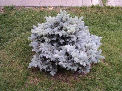 FOTKA - novovysadený stromčet