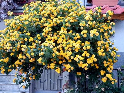 FOTKA - řecké květy 18