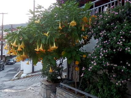 FOTKA - řecké květy 20