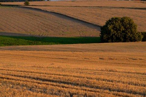 FOTKA - Keřík v polích