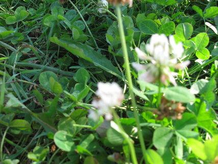FOTKA - travička zelená