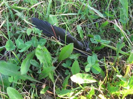 FOTKA - pírko v trávě