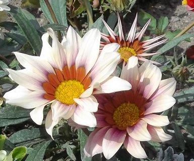 FOTKA - Květy ze zámeckého parku - u zvířátek