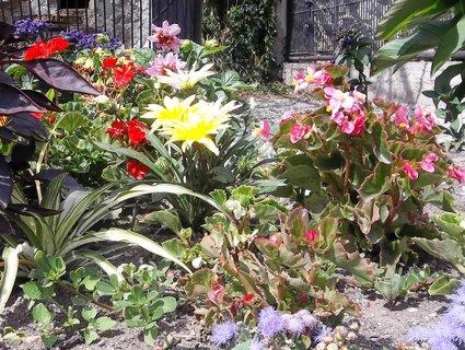 FOTKA - Květiny ze zámeckého parku
