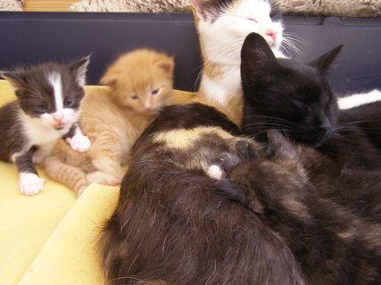 FOTKA - naše kočičky