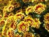 Květinky z květinářství. .