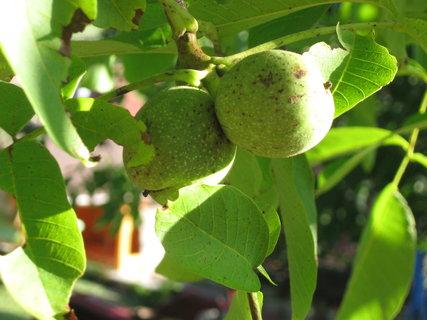 FOTKA - ořechy,,