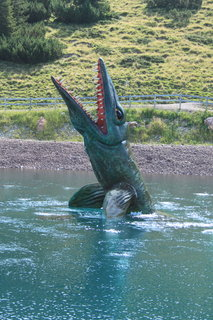FOTKA - Triassic Park - Steinplatte Waidring 20