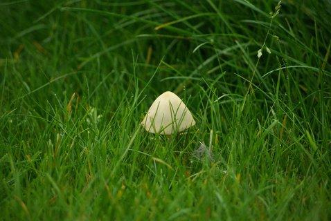 FOTKA - houbicka