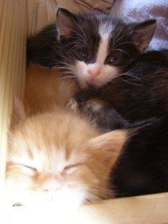 FOTKA - koťata v šuplíku