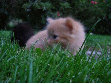 FOTKA - poprvé v trávě