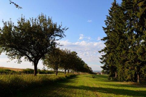 FOTKA - Silnice u lesa