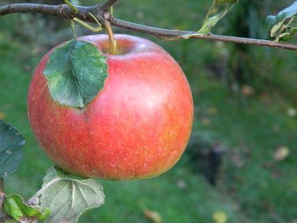 FOTKA - jablíčko,