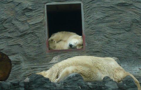 FOTKA - je vedro, medvědi spinkají :-)