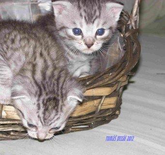 FOTKA - kota kočky 2