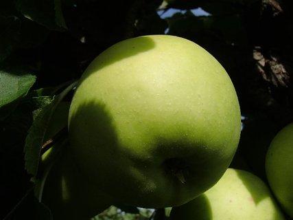 FOTKA - žlté jabĺčko v polotieni
