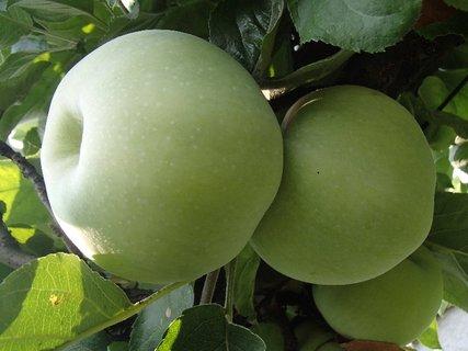 FOTKA - dve jabĺčka
