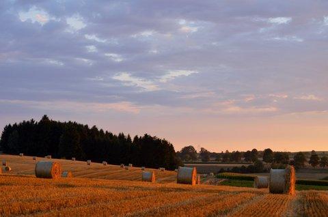FOTKA - Večerní pole
