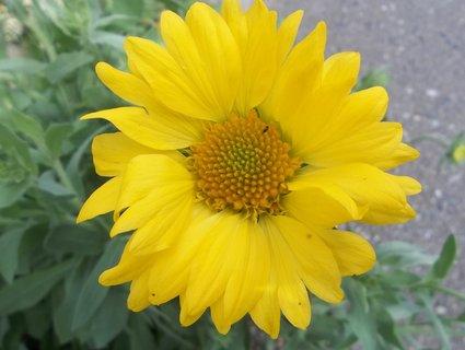 FOTKA - Žlutý květ. .