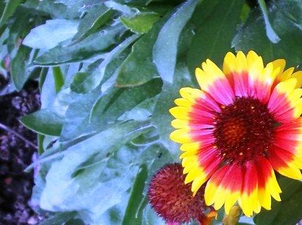 FOTKA - květinka z dovče