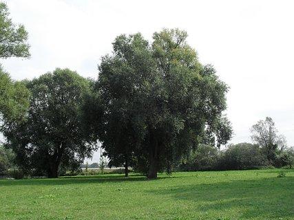 FOTKA - Stromy v dálce