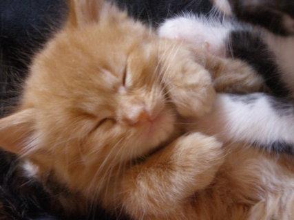 FOTKA - miminko kočičí.