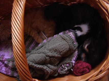 FOTKA - na pletení