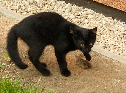 FOTKA - To je moje myška