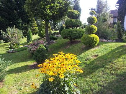 FOTKA - Zahrada ráno