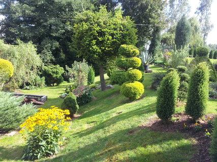 FOTKA - Zahrada ráno..
