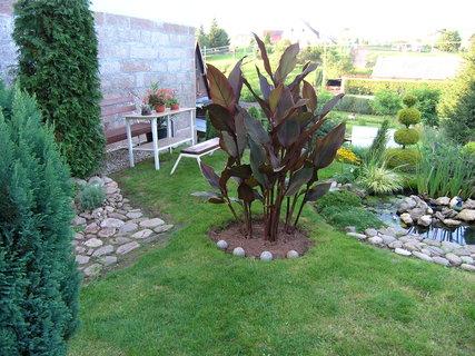 FOTKA - Zahrada dnes navečer