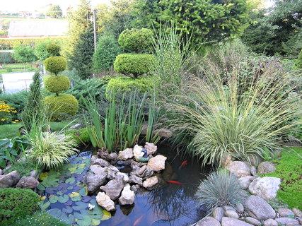 FOTKA - Zahrada dnes navečer.