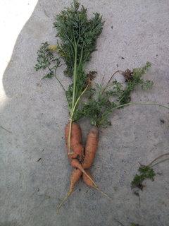 FOTKA - zeleninová kamasútra