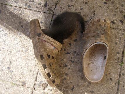FOTKA - špinavá bota je skvělá hračka