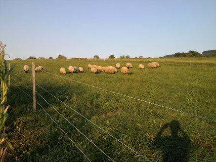FOTKA - stádo oveček