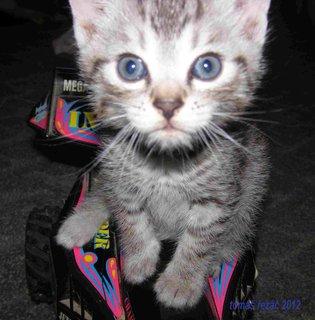 FOTKA - kočky kota 2012-1