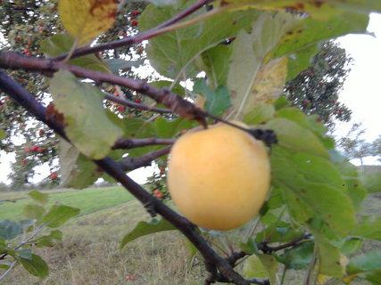 FOTKA - jablko..
