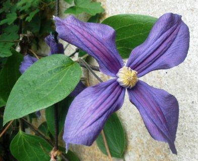 FOTKA - Květ plaménku