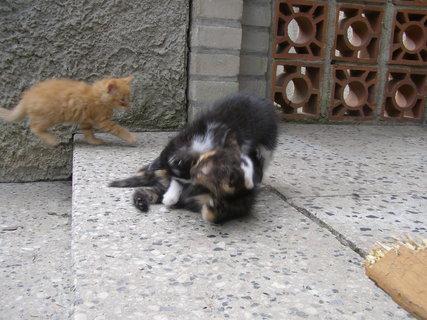 FOTKA - kočka ve vzduchu