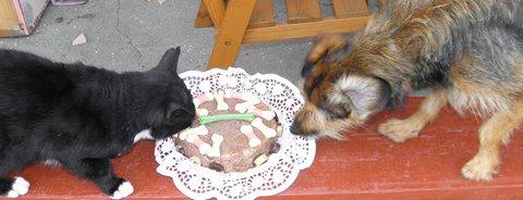 FOTKA - psí dortík,♥♥