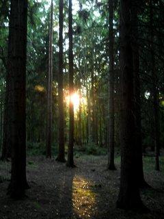 FOTKA - Ve�er v lese 2