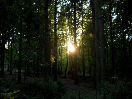 FOTKA - Večer v lese 3