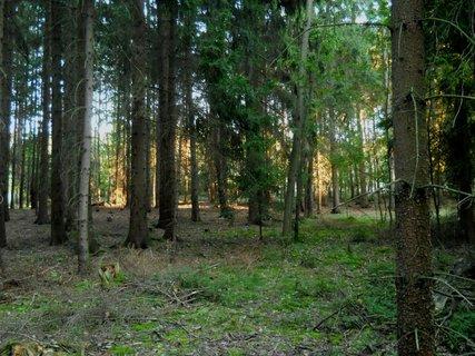 FOTKA - Večer v lese 4