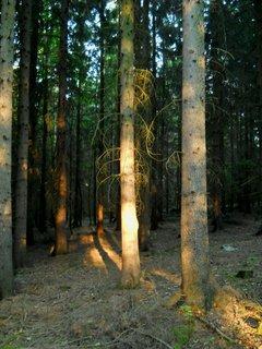 FOTKA - Večer v lese 5